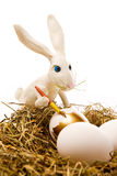The easter rabbit paints egg. The white rabbit paints egg in gold colour in a nest Royalty Free Stock Image