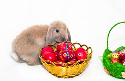 Easter Rabbit with red eggs Stock Images