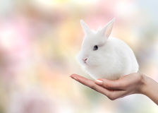 Easter rabbit on woman`s hand. Little Easter rabbit of white color represented on woman`s hand alone. Little Easter rabbit looking at camera. Easter concept Royalty Free Stock Image