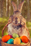 Easter rabbit on a wooden table outdoor Stock Photo