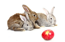 Easter rabbits Royalty Free Stock Images