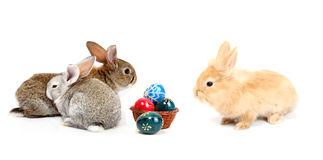 Easter rabbits Royalty Free Stock Photo