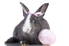 Easter Rabbits Royalty Free Stock Photography