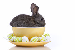 Easter Rabbits Stock Images