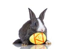 Easter Rabbits Royalty Free Stock Photo