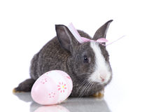 Easter Rabbits Royalty Free Stock Photos