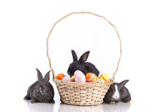 Easter Rabbits Stock Photo