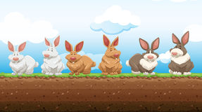 Easter rabbits standing on the ground Royalty Free Stock Image