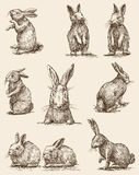 Easter rabbits. Vector image of a different rabbits Royalty Free Stock Photo