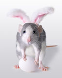 Easter Rat. A rat is wearing bunny ears and holding an egg for Easter