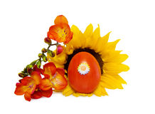Easter red egg with sunflower over white Royalty Free Stock Photo
