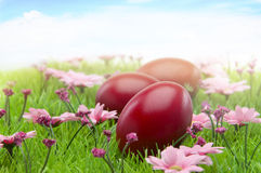 Easter red eggs on blooming grass Stock Photo