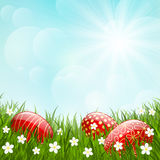 Easter red eggs on green grass Stock Photography