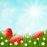 Easter red eggs on green grass Stock Photo