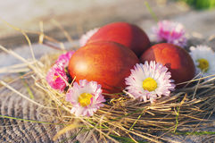 Easter red eggs and spring flowers in a nest Stock Photo