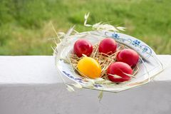 Easter red and yellow eggs with hay in plate outside stock image