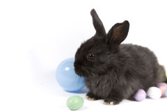 Easter Scene. Adorable baby bunny rabbits with easter props stock images