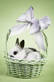 Easter Scene. Adorable baby bunny rabbit with easter props stock photo