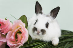 Easter Scene. Adorable baby bunny rabbit with easter props stock photography