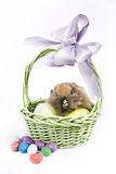 Easter Scene. Adorable baby bunny rabbit with easter props royalty free stock images