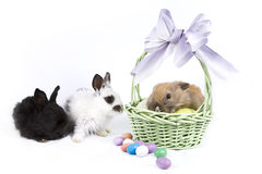 Easter Scene. Adorable baby bunny rabbits with easter props royalty free stock photos