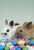 Easter Scene. Adorable baby bunny rabbit with Easter eggs royalty free stock photo