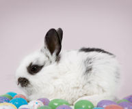 Easter Scene. Adorable baby bunny rabbit with Easter eggs stock image