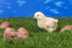 Easter scene : chicken and egg Stock Photography