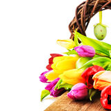 Easter setting with colorful tulips Royalty Free Stock Image