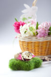 Easter setting - quail eggs and hyacinth flowers Stock Photos