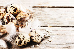 Easter setting with quail eggs Royalty Free Stock Photos