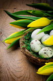 Easter setting with yellow tulips Stock Photos