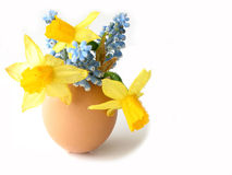 Easter shell Royalty Free Stock Image