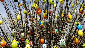 Easter shrub willow stock footage