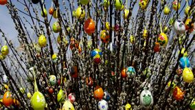 Easter shrub willow stock video footage