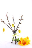 Easter simbol yellow eggs hanging on the willow Royalty Free Stock Image