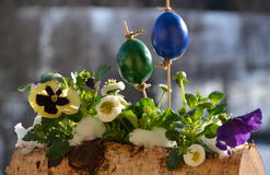 Easter snow-covered box with pansy, eggs and daisy royalty free stock photos