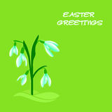 Easter snowdrops Stock Photo