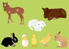 Easter spring baby animals Royalty Free Stock Photos