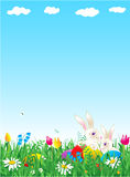 Easter and spring background. Easter and spring vertical vector background with bunnies, eggs, fresh green grass, wild flowers and large copy space Stock Photos