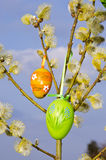 Easter spring background eggs hang pussy-willow Royalty Free Stock Photos