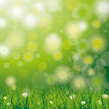 Easter Spring Background Grass Daisy Flowers. White flowers in grass on the bokeh background vector illustration