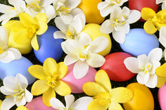 Easter eggs hidden among spring flowers Royalty Free Stock Photos