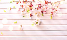 Easter Spring Blossom on white wooden plank background. Easter Apricot flowers on wood border art design. Pink blooming tree royalty free stock photos