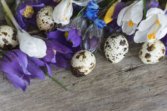 Easter and spring concept Stock Photography