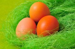 Easter spring  Egg Royalty Free Stock Image