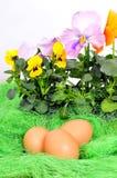 Easter spring flower eggs Royalty Free Stock Images
