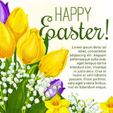 Easter spring flower greeting card with copy space Royalty Free Stock Photography
