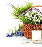 Easter spring flowers in basket Stock Images