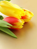 Easter spring flowers tulips Stock Images